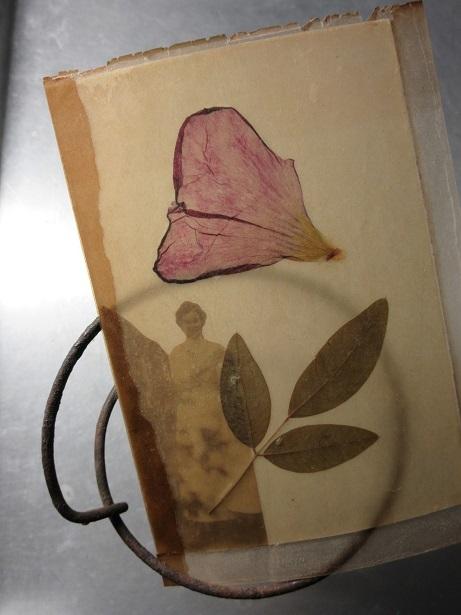 花脈と葉脈