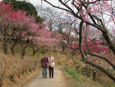 梅の花見2