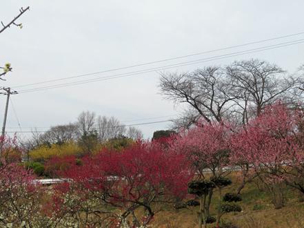 梅の花見6