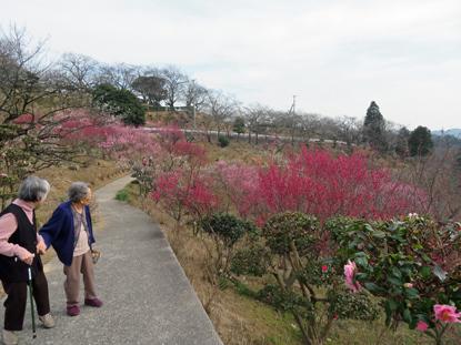 梅の花見9