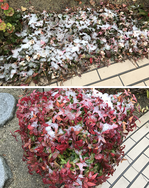20190211積雪2