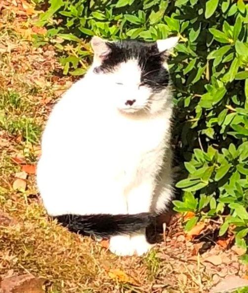 広島城の猫1-1