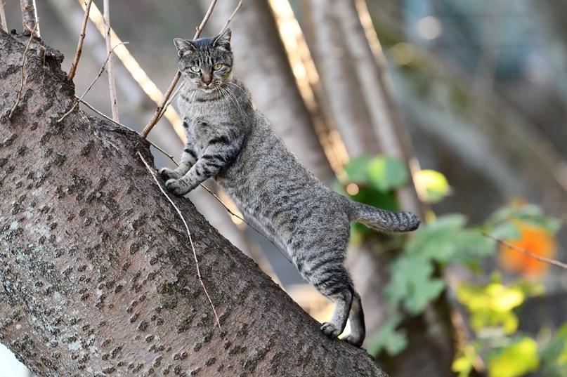 黄金山の猫1