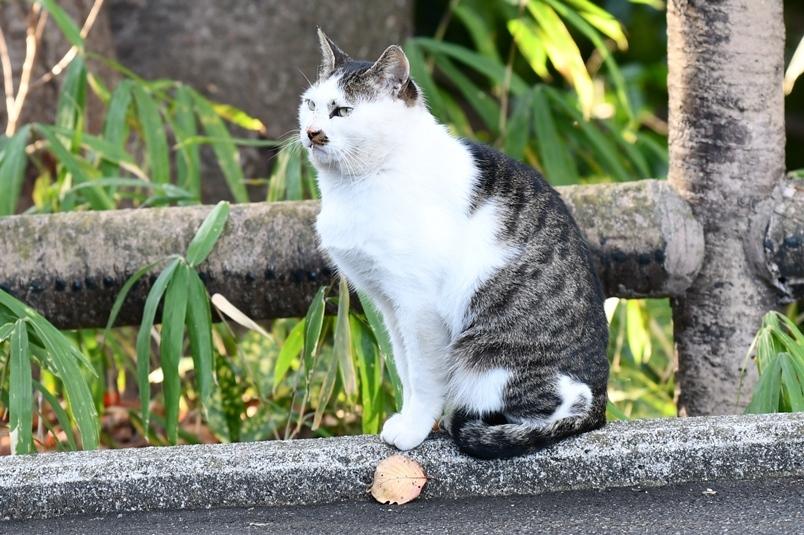黄金山の猫2