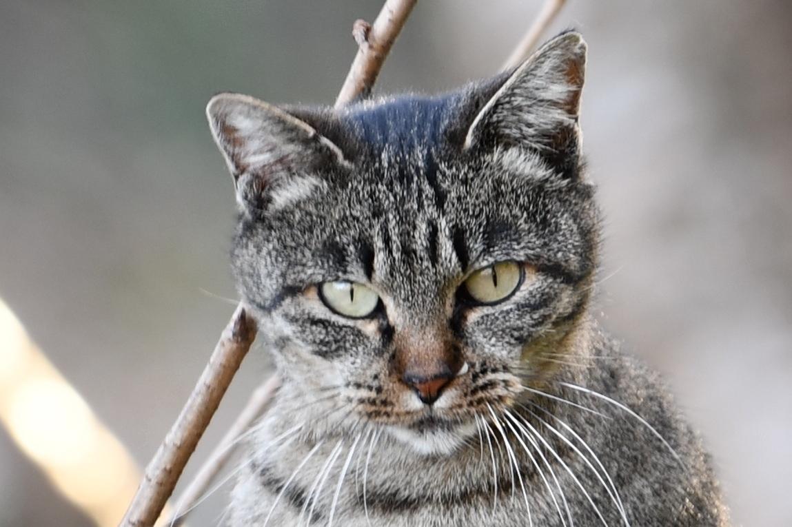 黄金山の猫1-1
