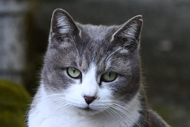 比治山の地域猫3-1