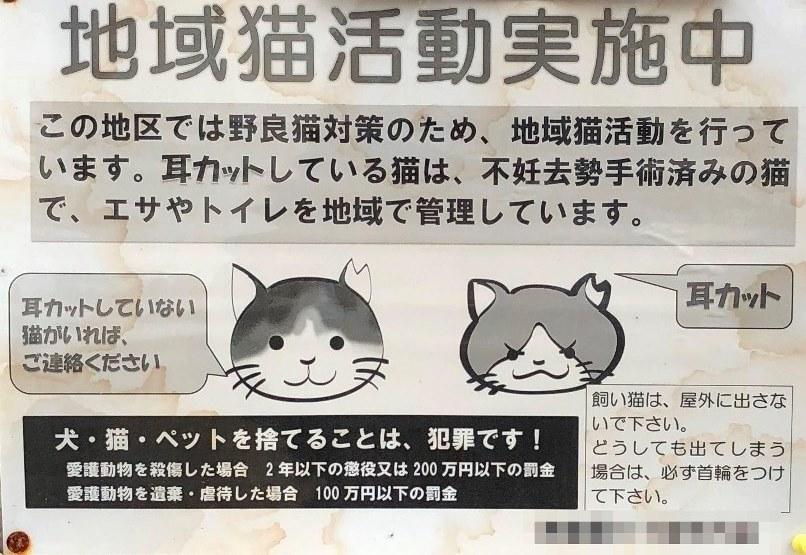 耳カット猫 地域猫