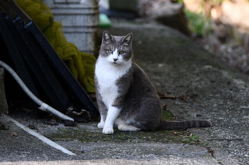 比治山の地域猫3