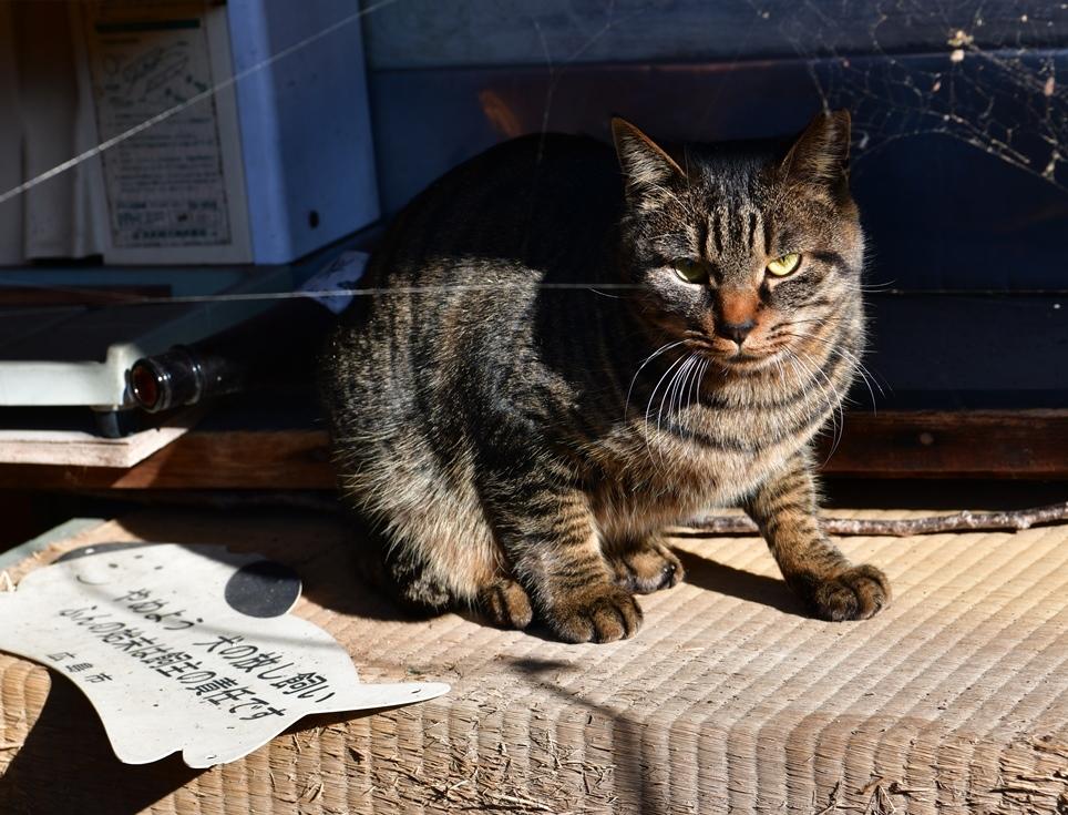 比治山の地域猫1