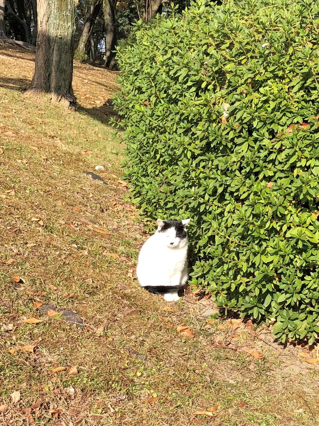 広島城の猫1