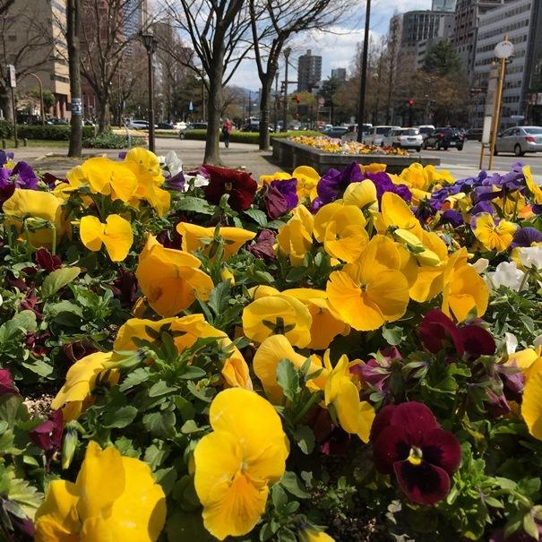広島市 お花畑