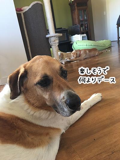 22022019_dog2.jpg