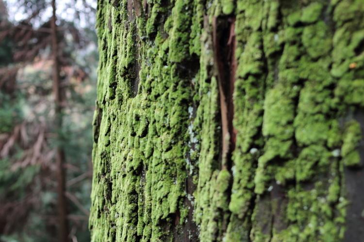 苔むした巨木-S3