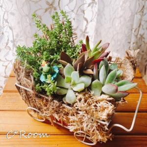 植物(多肉)01