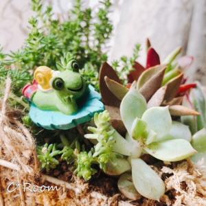 植物(多肉)02