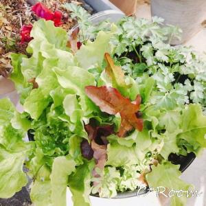 植物(野菜)01