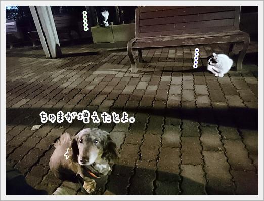 fc2_2019-02-21_04.jpg