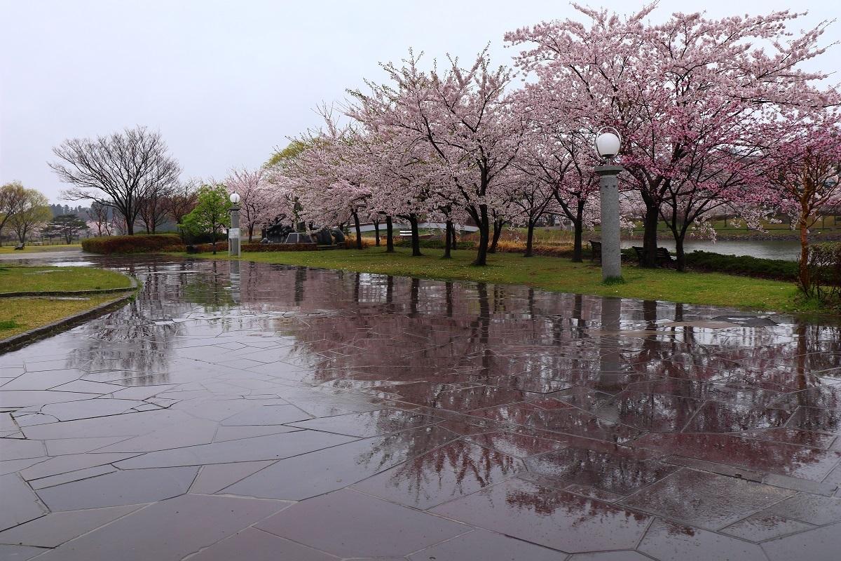 20180424グリーン雨20