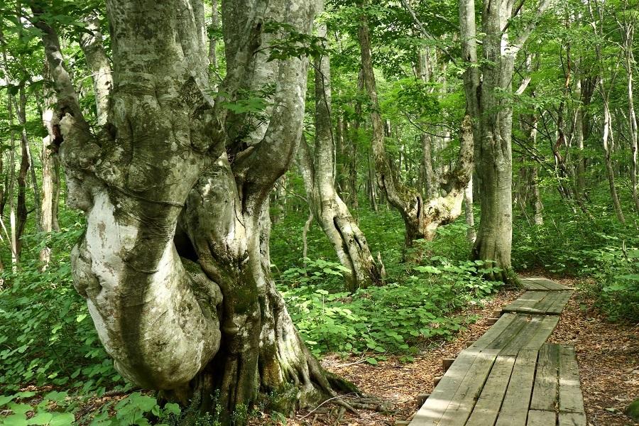 異形樹の森115