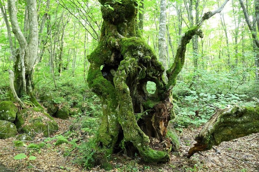 林道の樹1