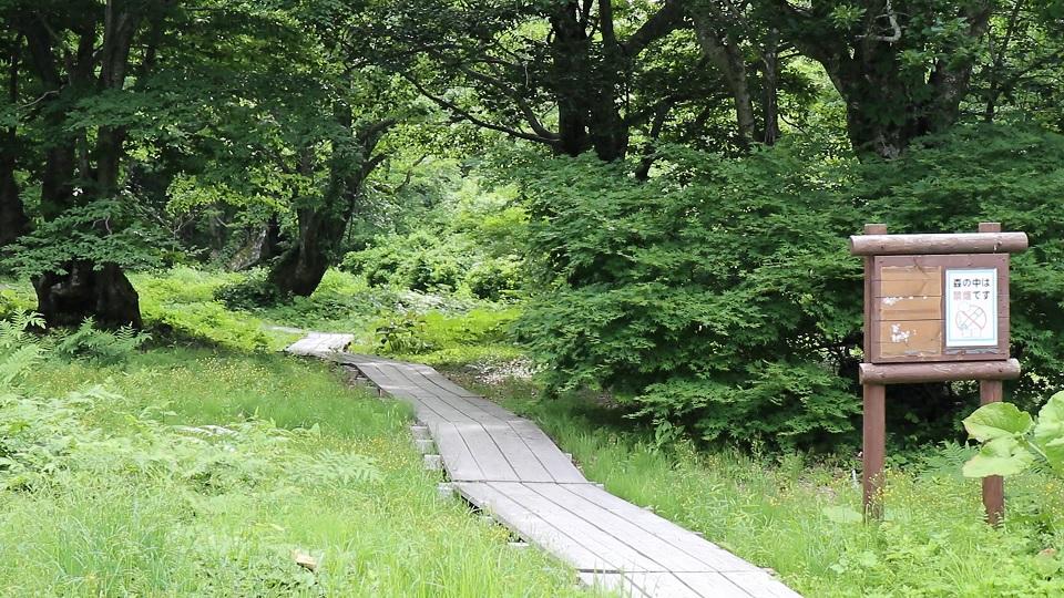 異形樹の森3