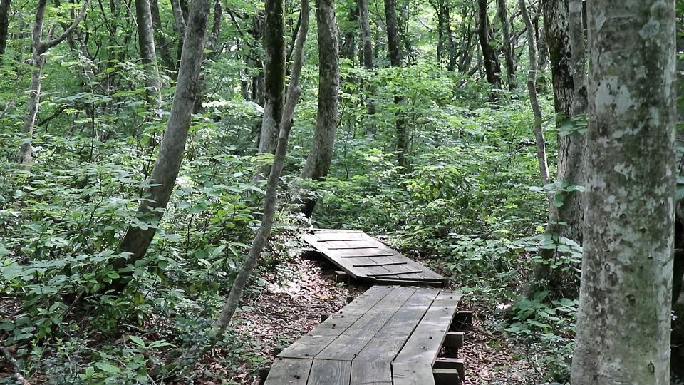 異形樹の森4