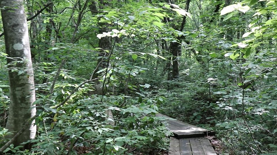 異形樹の森5