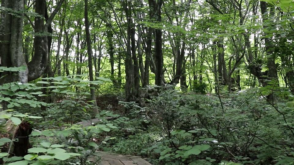 異形樹の森6