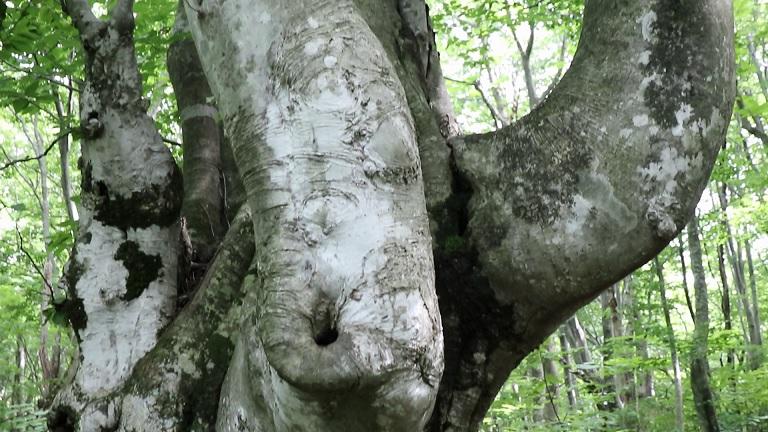異形樹の森7