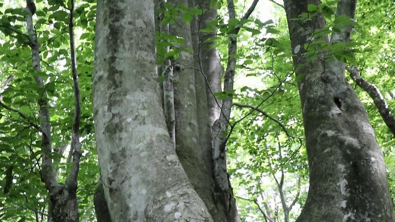異形樹の森8