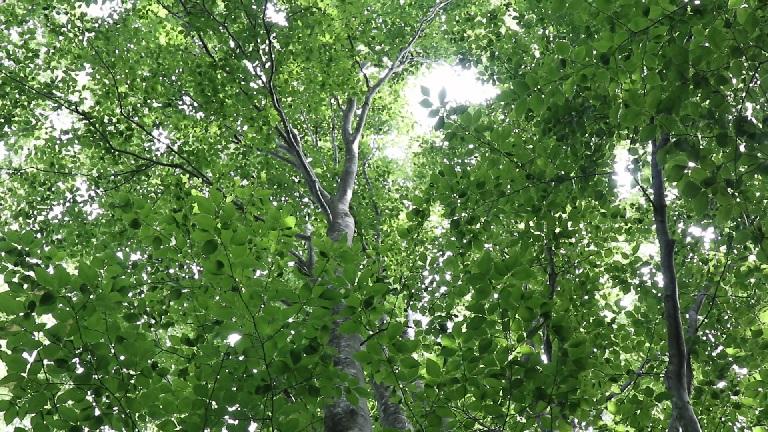 異形樹の森9