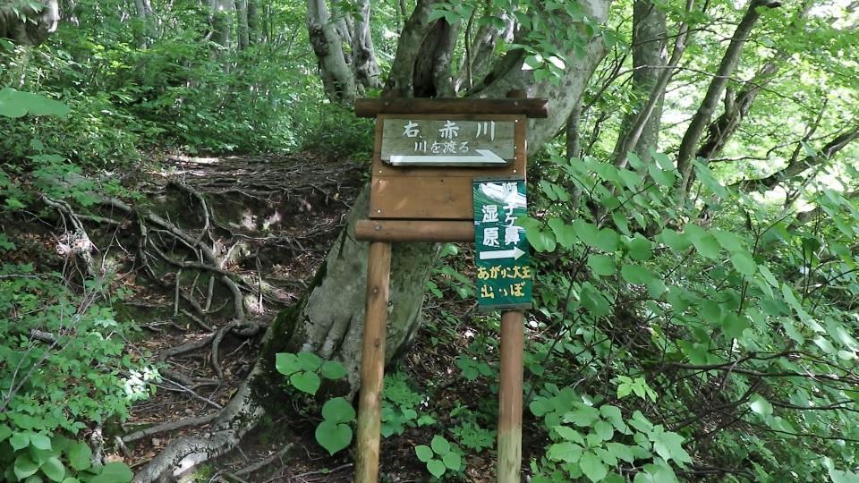 異形樹の森10