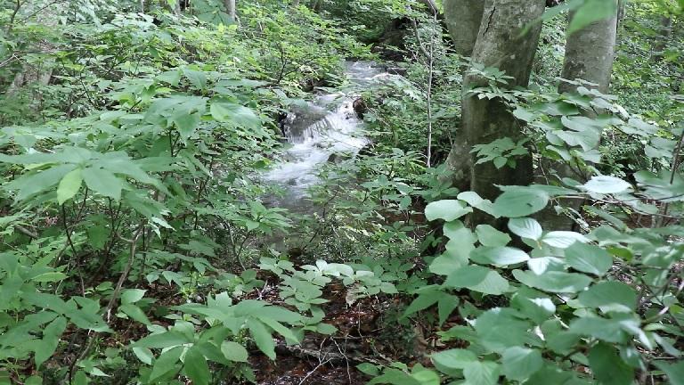 異形樹の森16