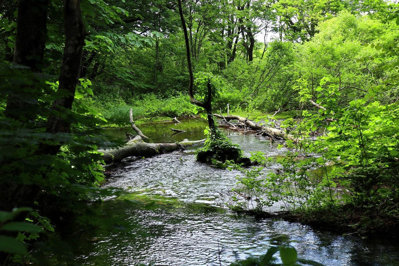 異形樹の森17