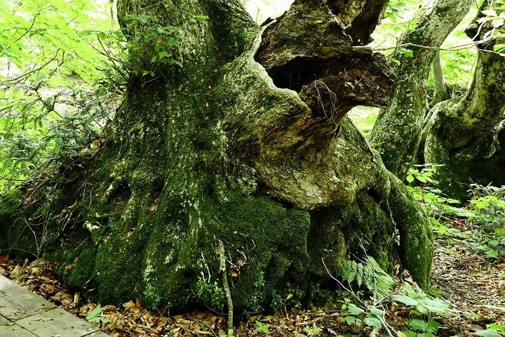 異形樹の森13