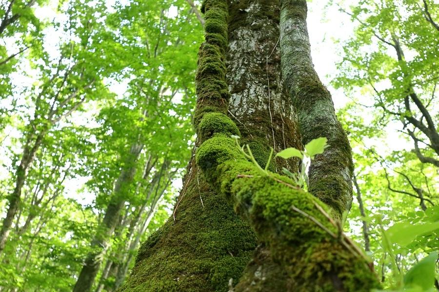 異形樹の森20