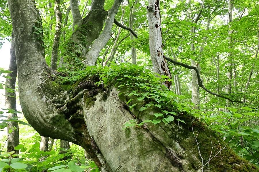 異形樹の森21