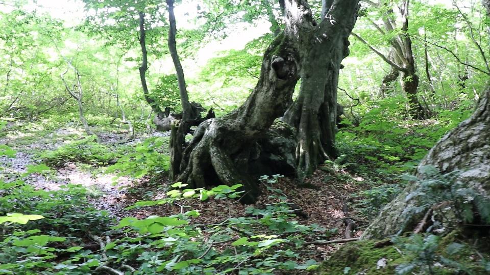 異形樹の森23