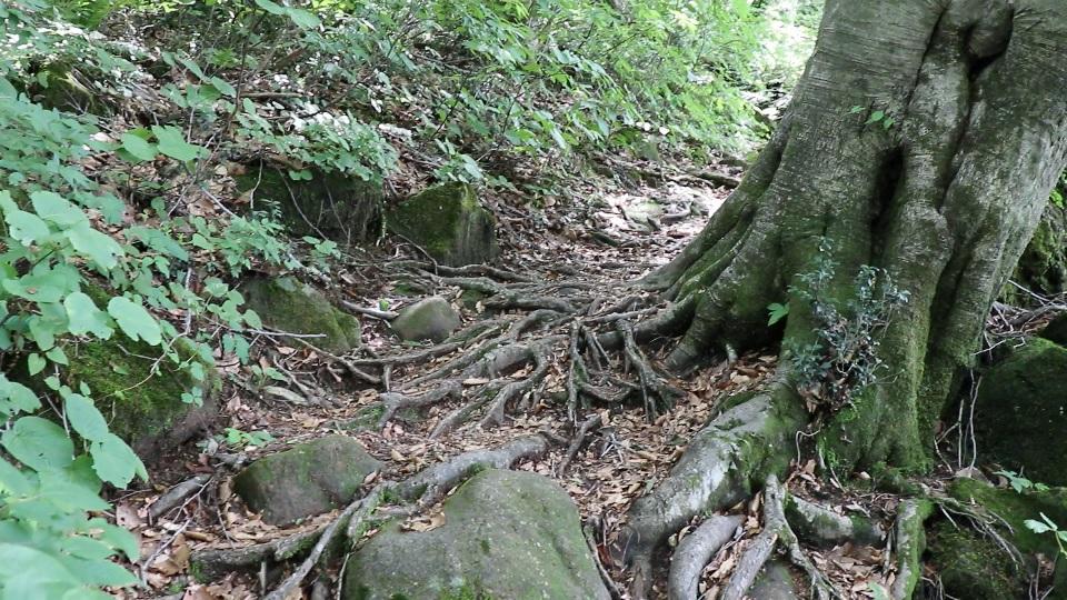 異形樹の森24