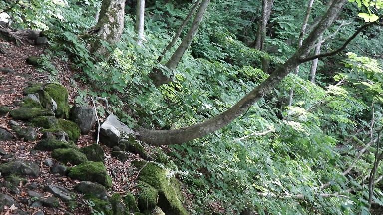 異形樹の森26