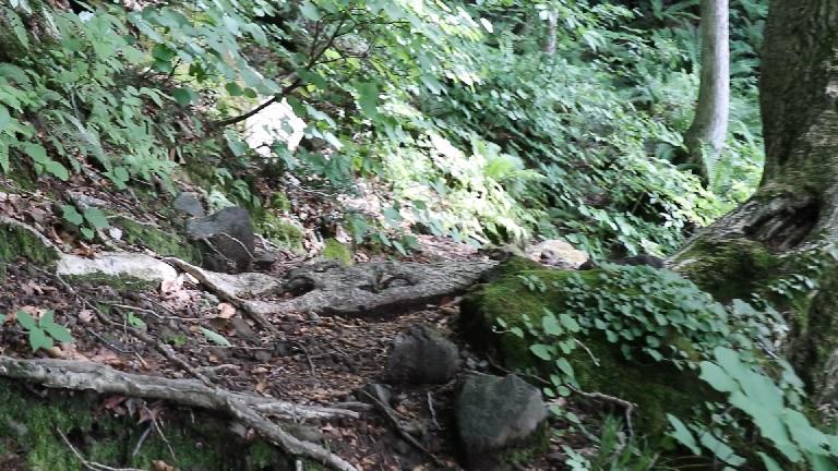 異形樹の森27