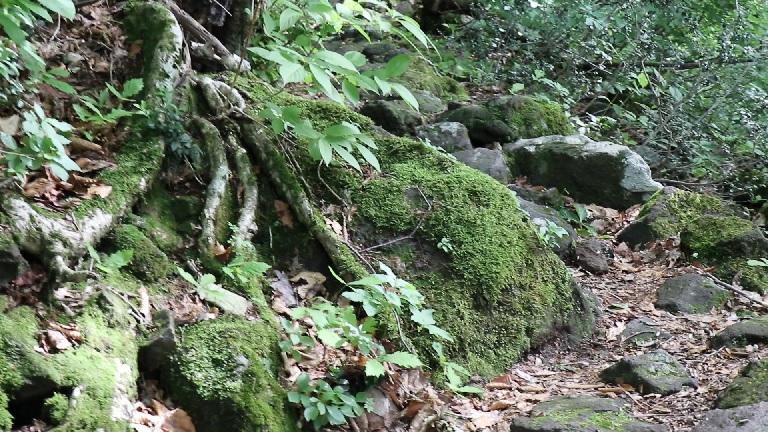 異形樹の森25