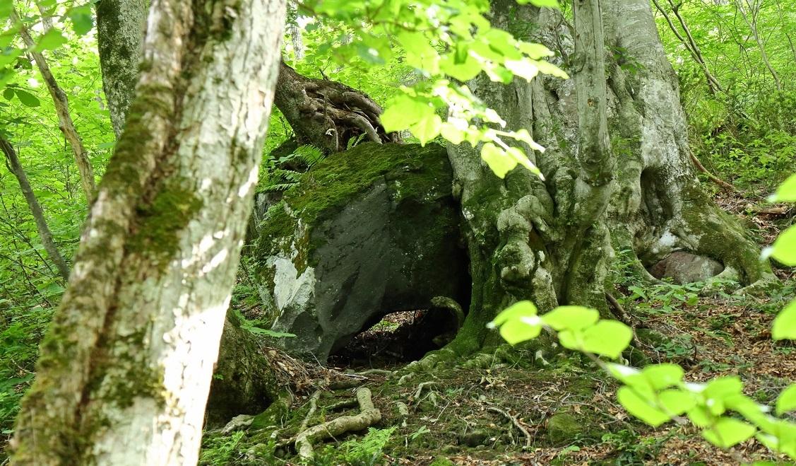 異形樹の森22