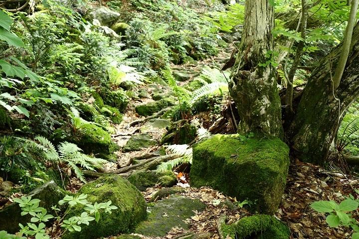 異形樹の森29