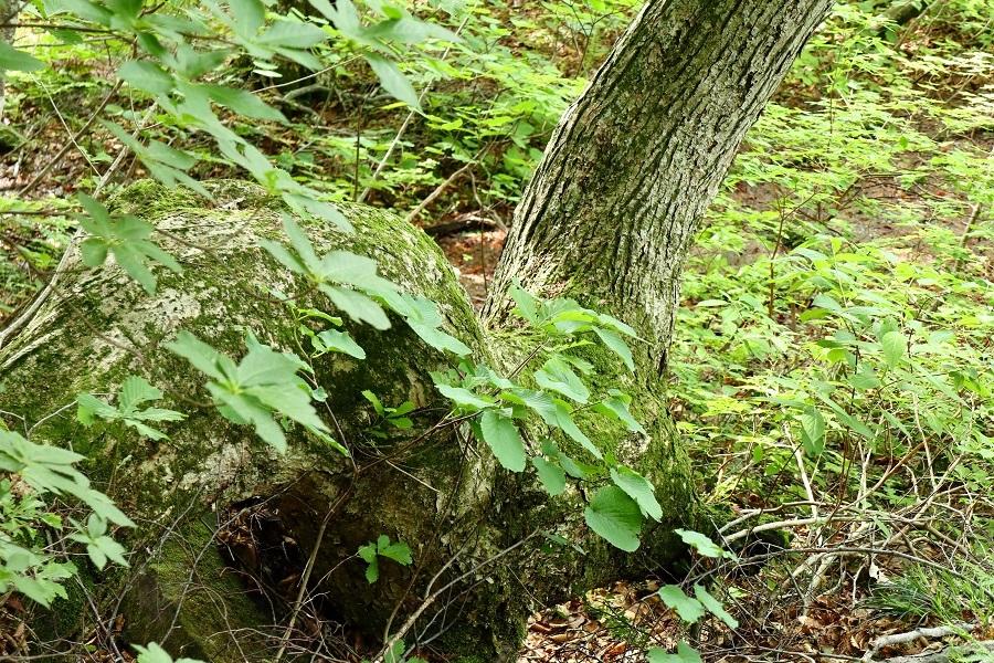 異形樹の森31