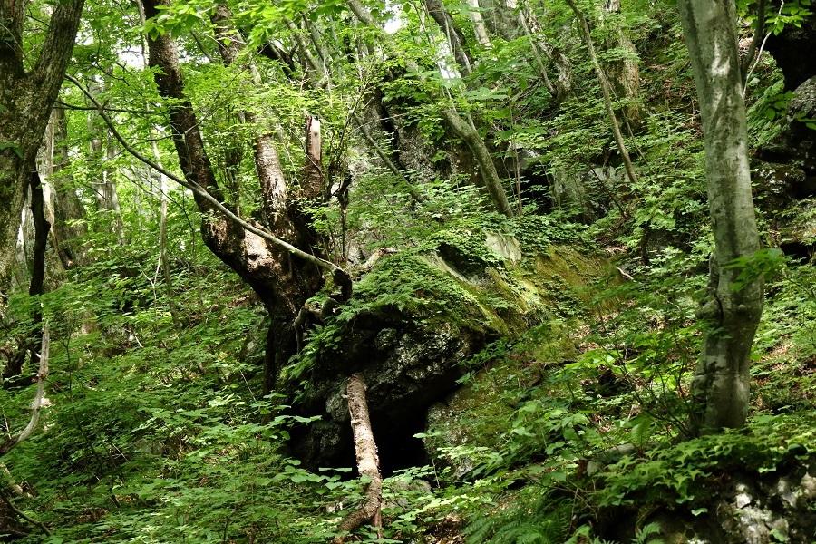 異形樹の森32