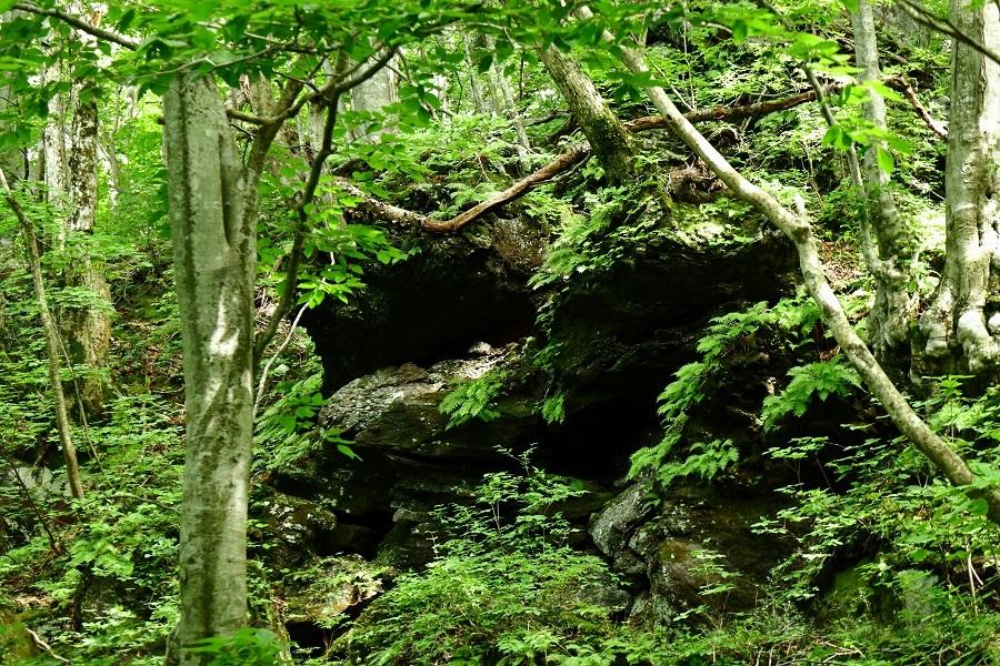 異形樹の森33