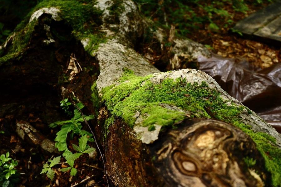 異形樹の森35