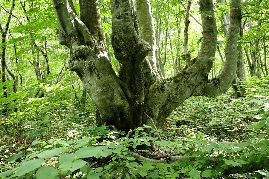 異形樹の森36