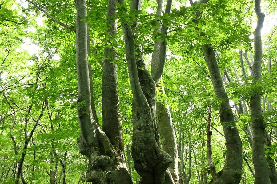 異形樹の森37